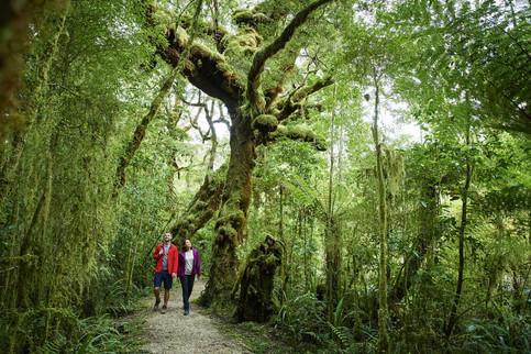 Regenwald an der Westküste