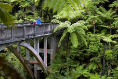 Whanganui NP / Bridge to Nowhere