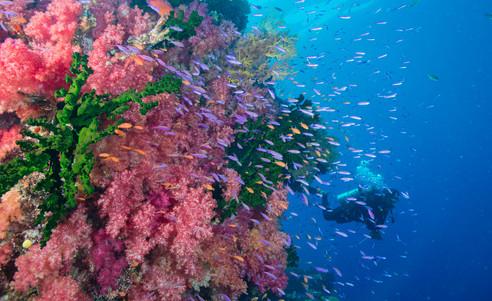 Taveuni-tauchen-Rainbow_Reef