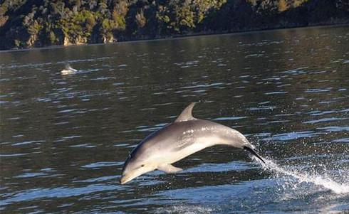 Bay_of_Many_Coves_Resort-Delfin