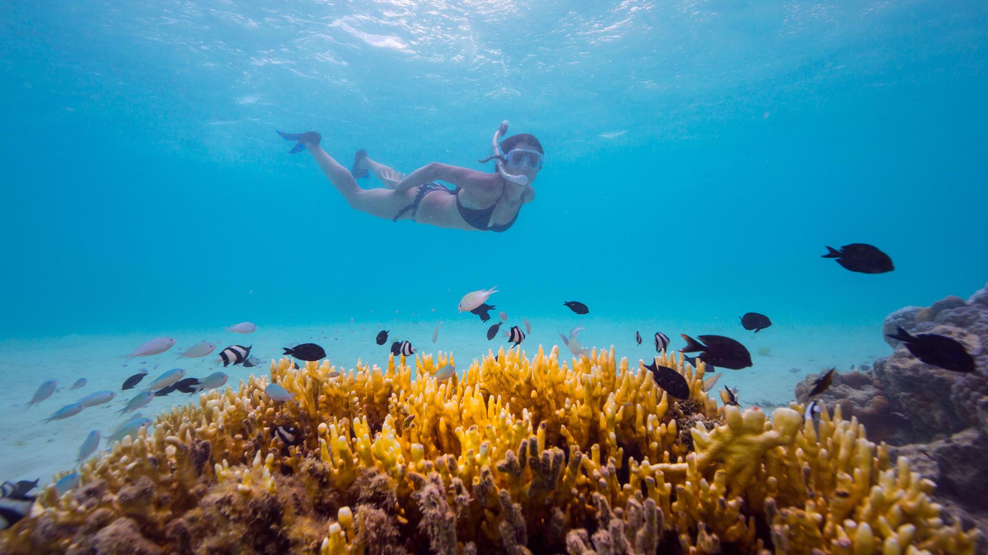 Pacific_Resort_Rarotonga-Schnorcheln