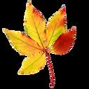 Fall-Leaf-5.png