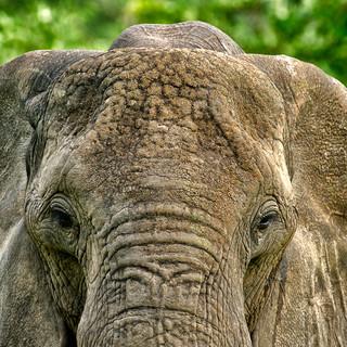 Elephants for Unlimited-1.jpg