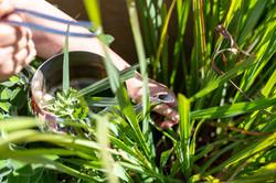 נחל פארן 32 - צמחים לתה