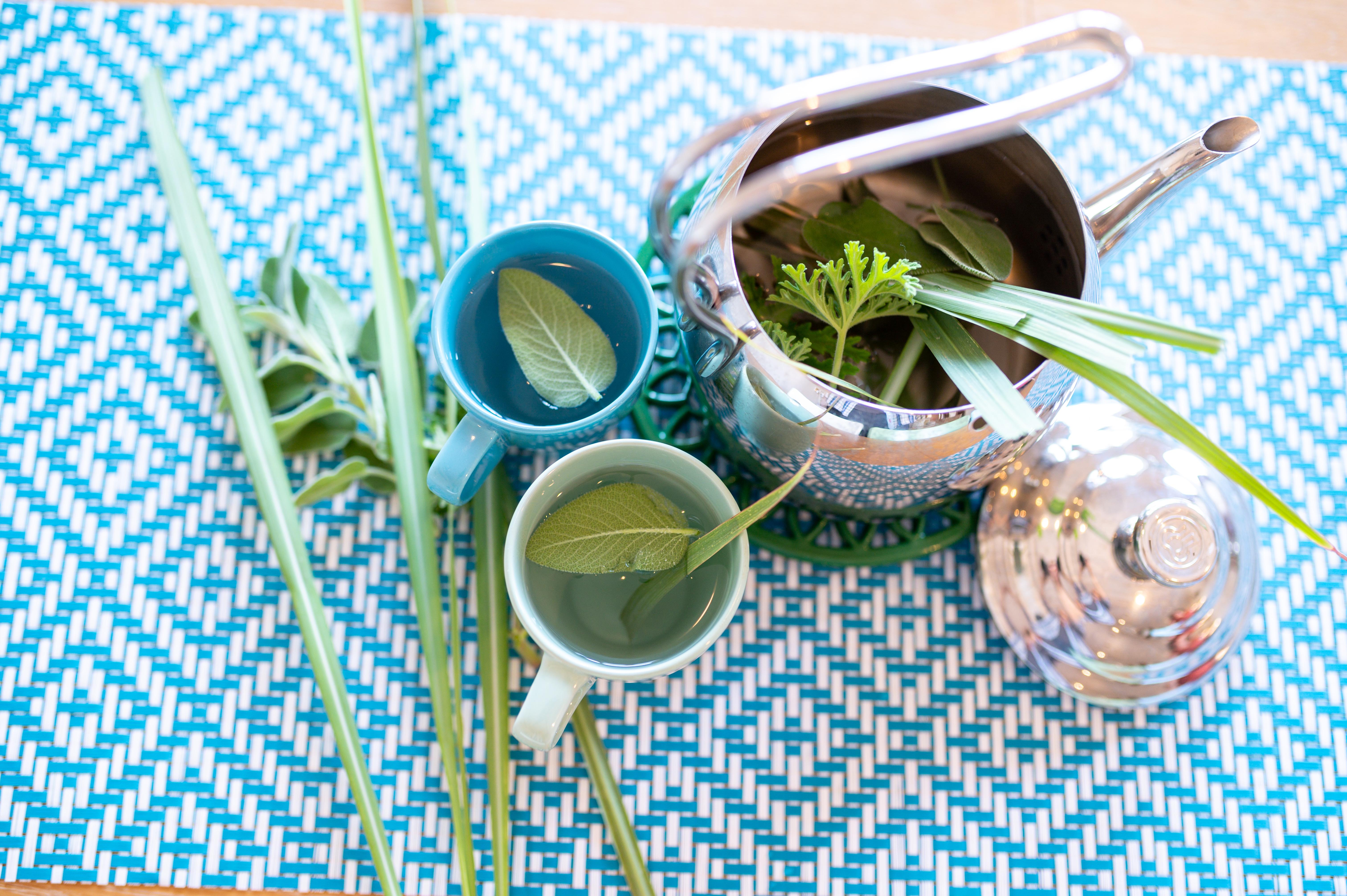 נחל פארן 32 - צמחים לתה וקומקום לחליטה