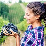 Grow in Lodi Winery.jpg