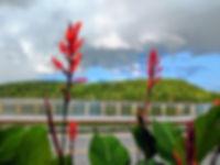 boardwalk red flowers.jpg