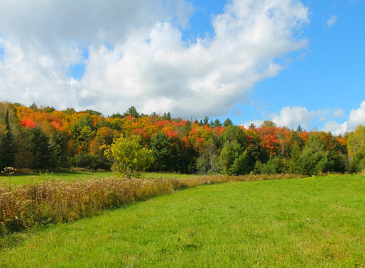 This weekend is a symphony of fall colours 🍂🍁 & great music 🎵in Wakefield Qc, October 10-13