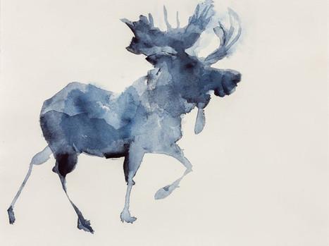 Moose, Indigo Watercolor on Paper