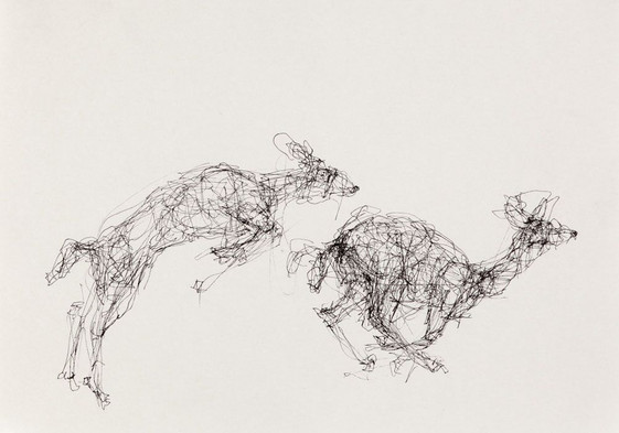 Deer, Ink on Paper