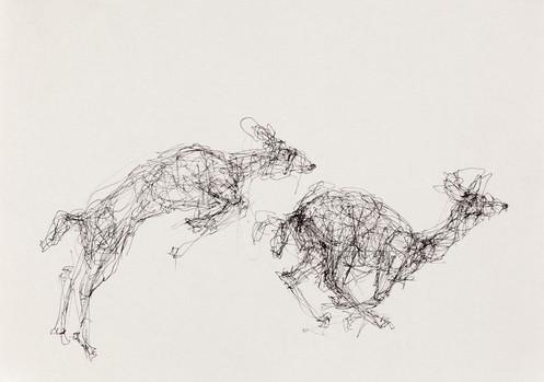Deer, Ink on Paper