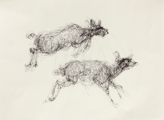 Muybridge Deer, Ink on Paper
