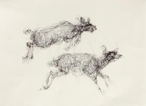 Muybridge Deer, Ink on Paper