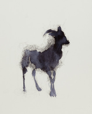 Goat, Ink and Wash on Paper