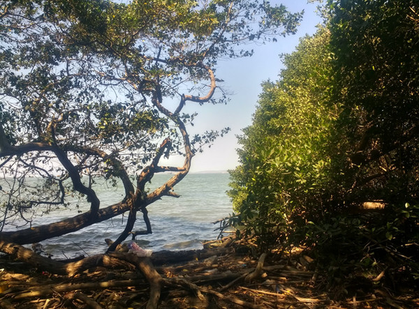 Monitoreo de manglar