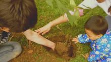 Adopta un árbol en Usme