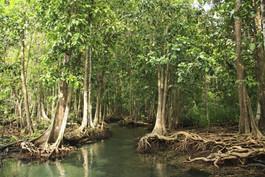 Una estrategia de la Naturaleza: El manglar