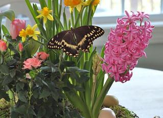 Spring Tabletop Garden Class