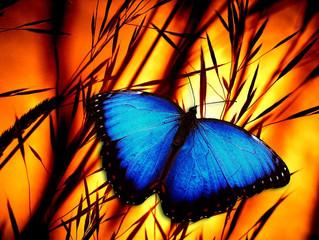 Pleiadian blue