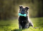 selective-focus-shot-adorable-german-she
