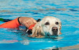 lifeguard-dog.jpg