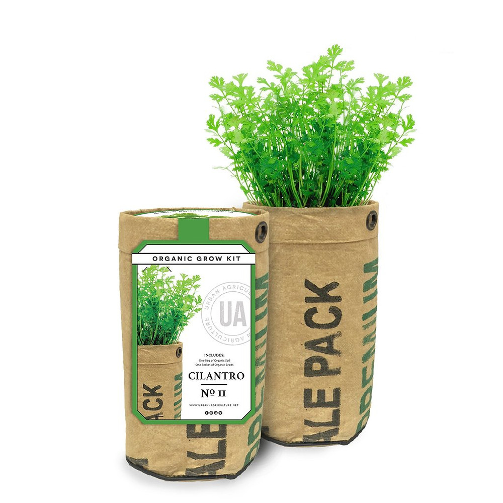 Urban Agriculture Cilantro grow kit