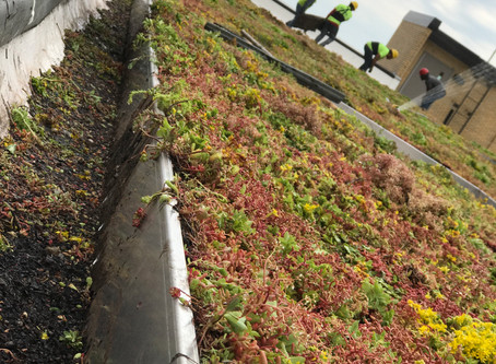 Green Roofs Installed at MCC's Downtown Campus