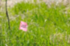Wetlands2_Flag.jpg