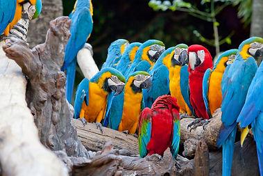 beautiful Scarlet macaw.jpg