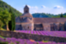 Lavender Fields At Senanque Monastery, P