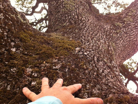 Musings on Heart-Rot From My Conversation With A Tree