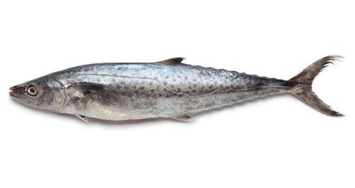 Surmai (king Mackerel)