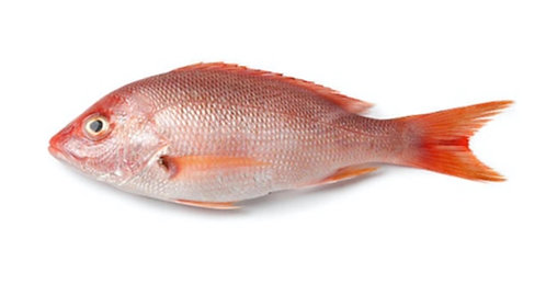 Heera (Red Snapper)
