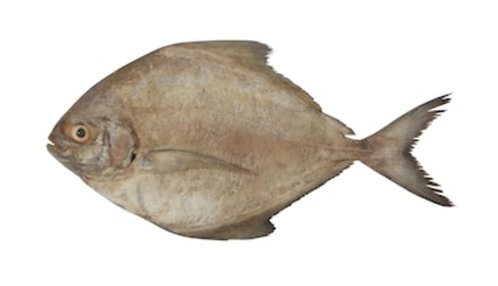 Kala Paplet (Black Pomfret) (small)