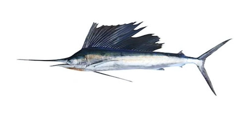 Ghora (Marlin)