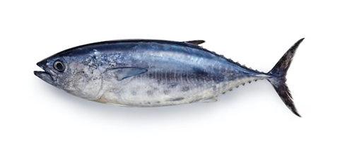 Dhawan (Tuna)
