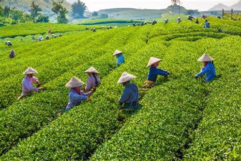 Vietnamese Wild Tea Flight