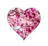 cherry-blossoms-heart (6).jpg