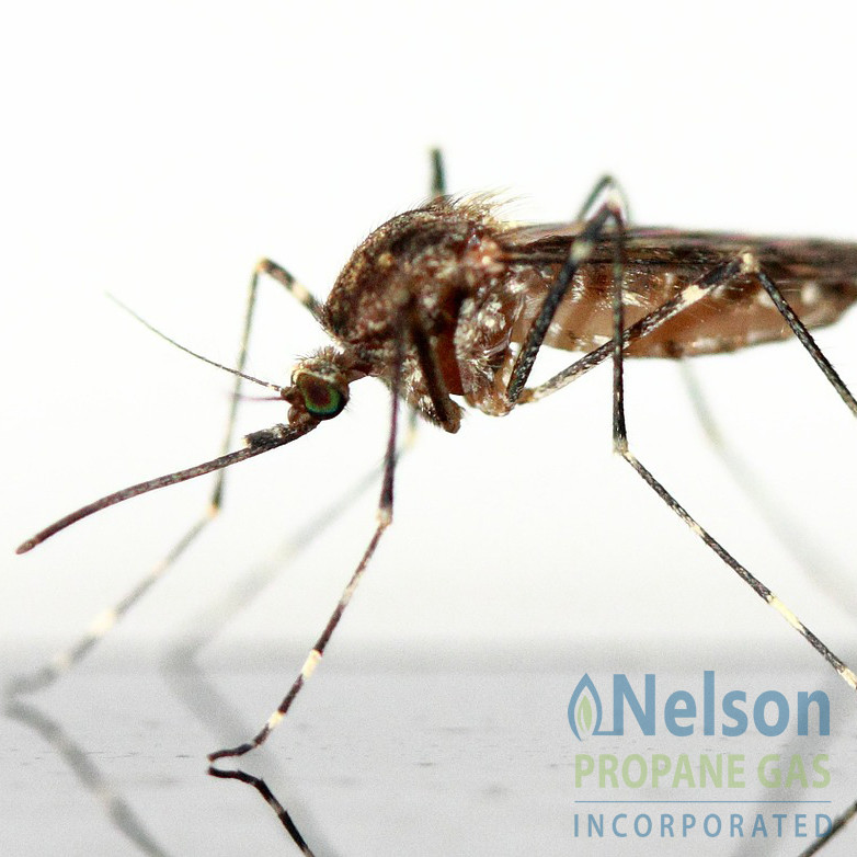 How A Propane Mosquito Trap Could Save Your Summer - Nelson Propane