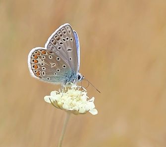 bloom-blossom-butterfly-158536.jpg