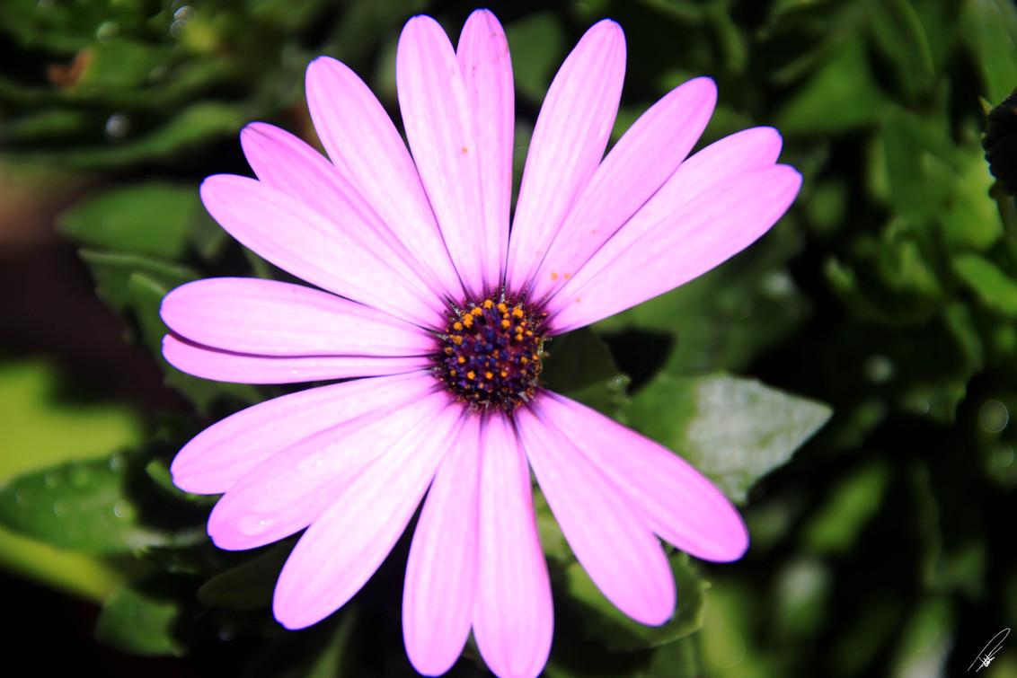 Flora Photography