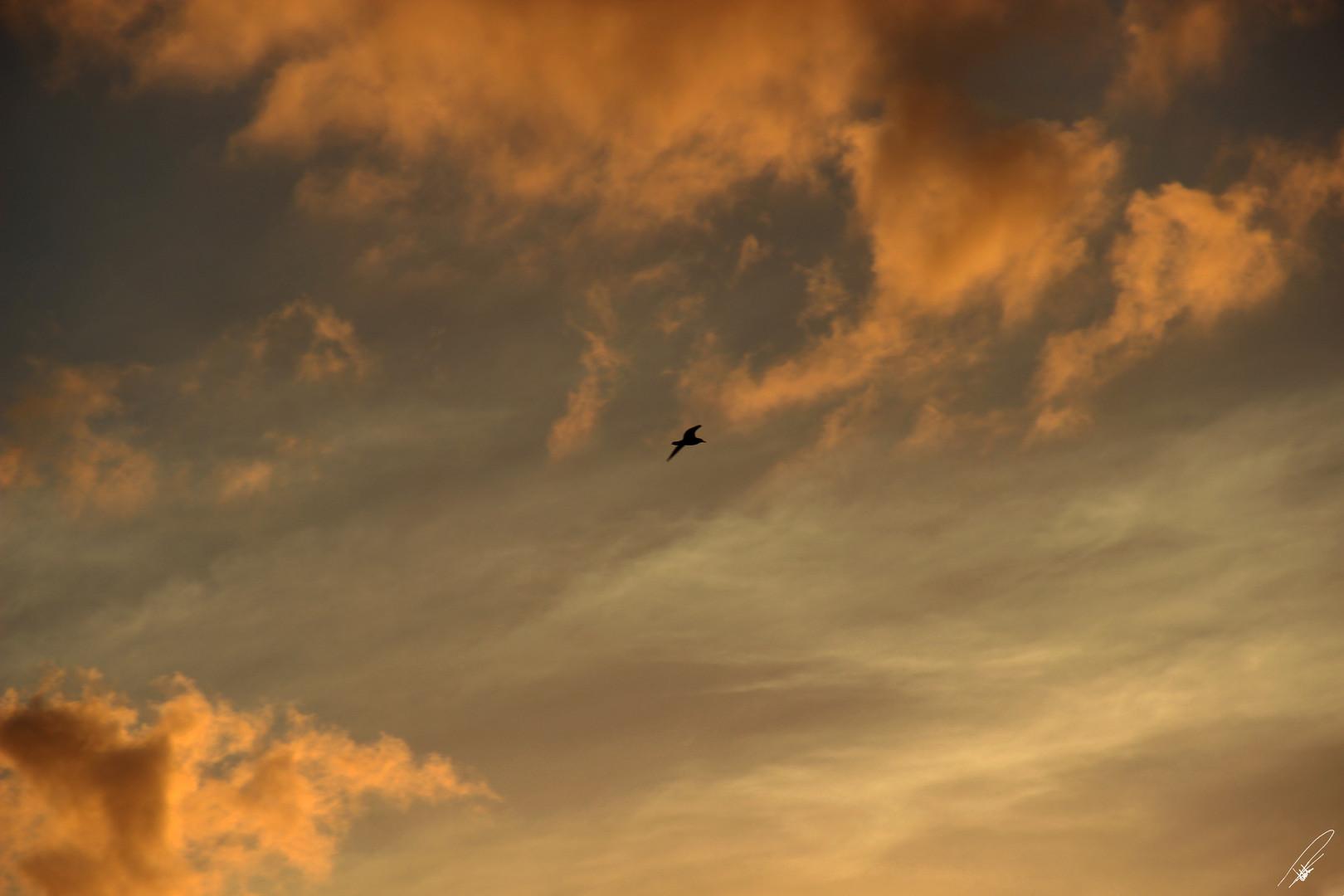 Sunsets and Sunrises Photography