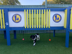 puppy in play area