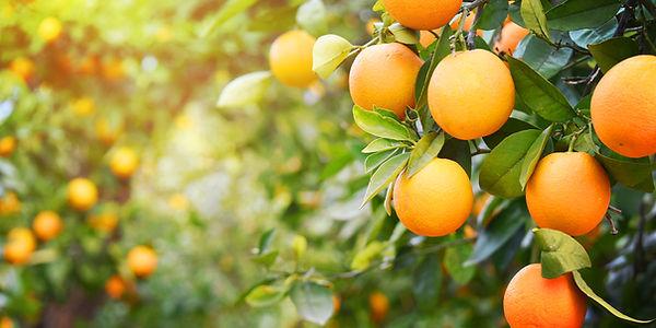 New Zealand oranges.jpg