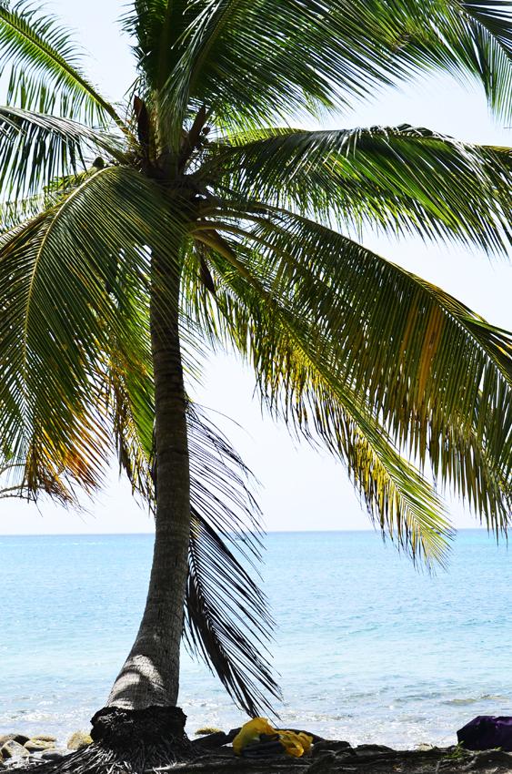 Martinique_2016_08