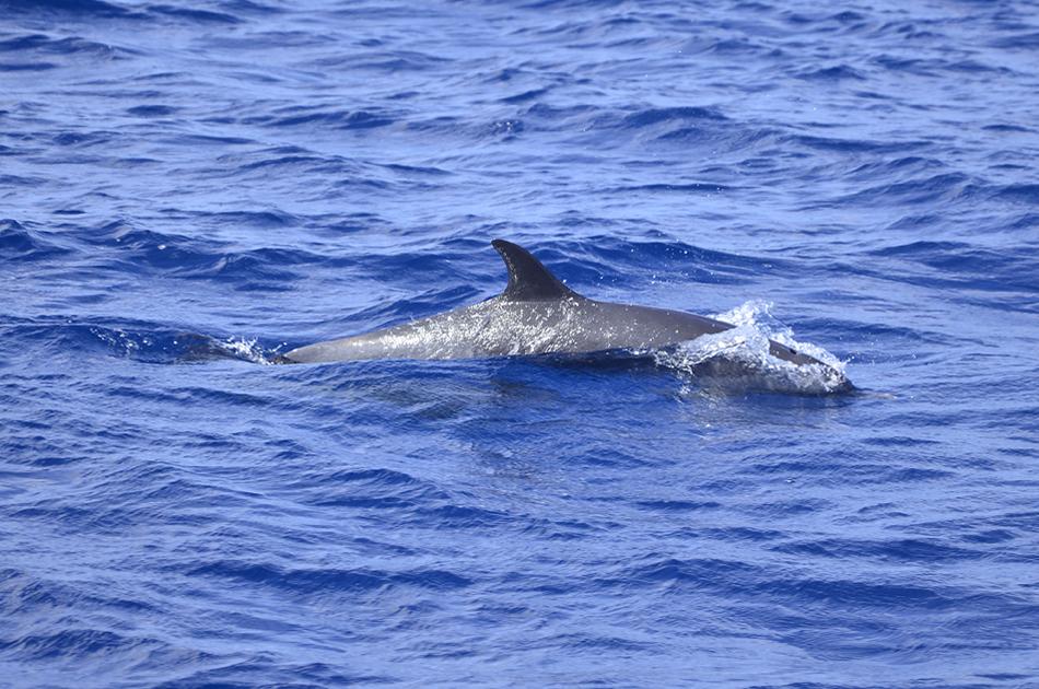 delfin_2.jpg