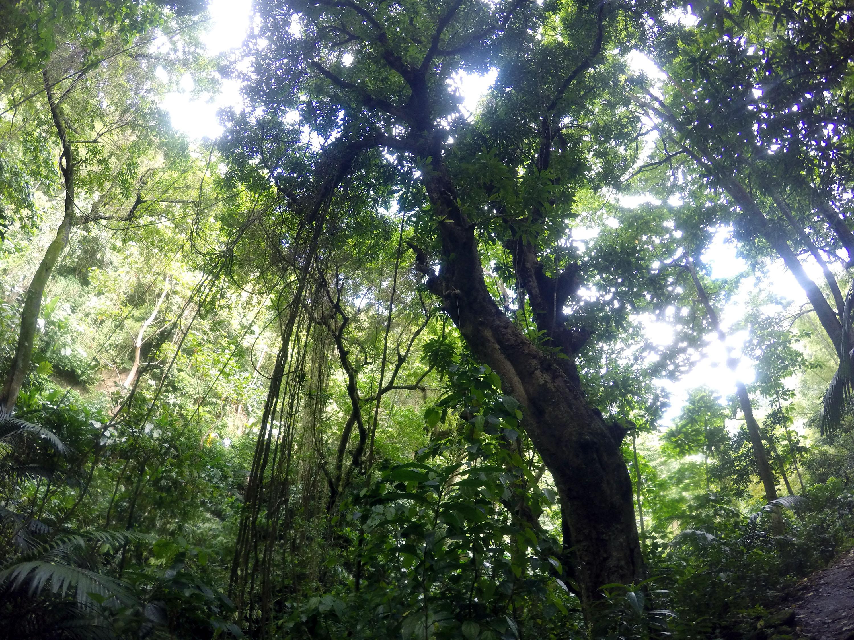 Martinique_2016_0032