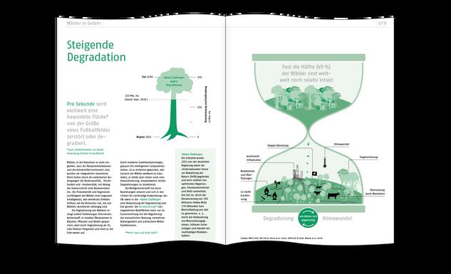 Steigende Degradation der Wälder