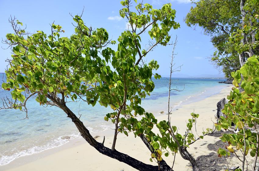 Martinique_2016_11