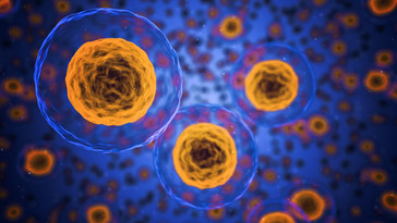 Aprovada regra para células humanas em uso terapêutico